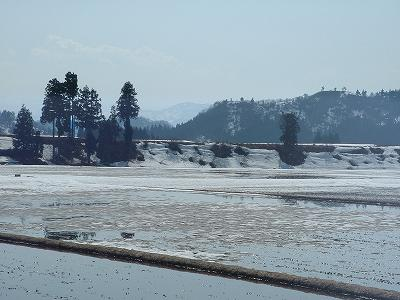 魚沼産コシヒカリの田んぼの雪解け