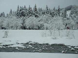 新潟県南魚沼市では久しぶりに雪が積もりました