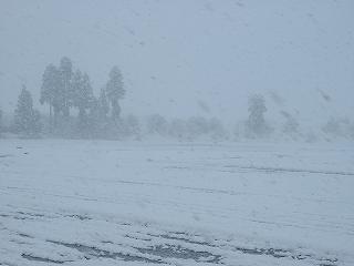 魚沼産コシヒカリの田んぼもまたすっかり雪景色に戻っています
