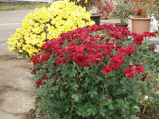 我が家の庭先の花です。