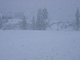 魚沼産コシヒカリの田んぼはすっかり冬景色