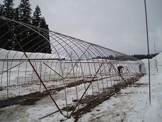 除雪機で雪を飛ばしたところにビニールハウスを建てています